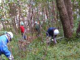 現場での竹伐採、整理
