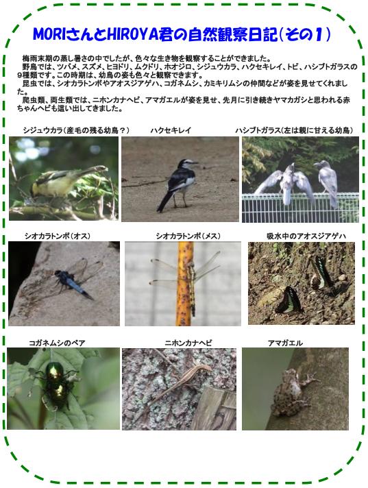20130725_nature_img_03.jpg