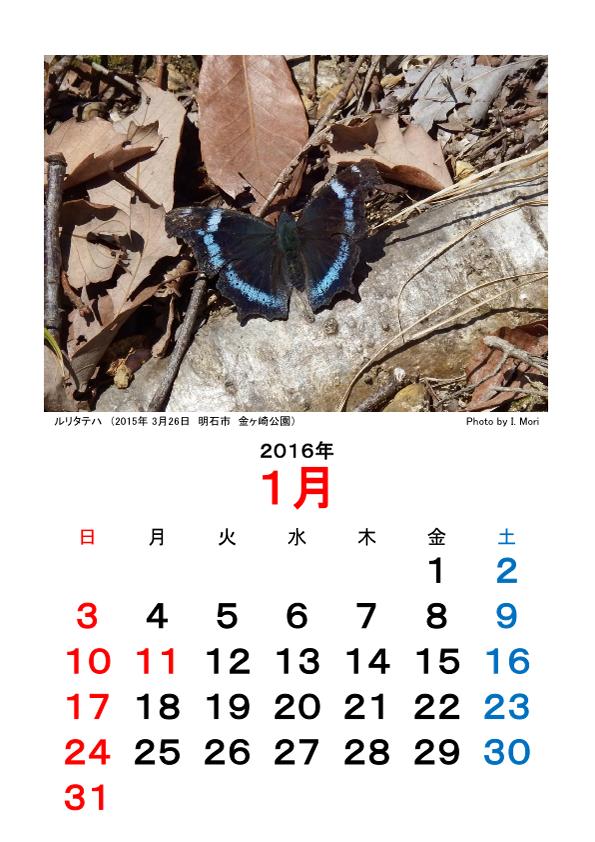 2016カレンダー昆虫Ver.png