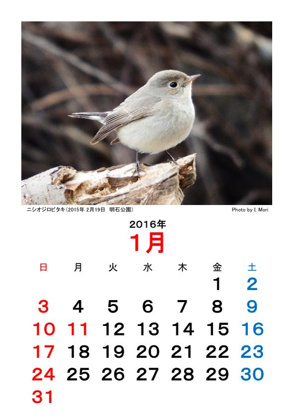 2016カレンダー野鳥Ver.png